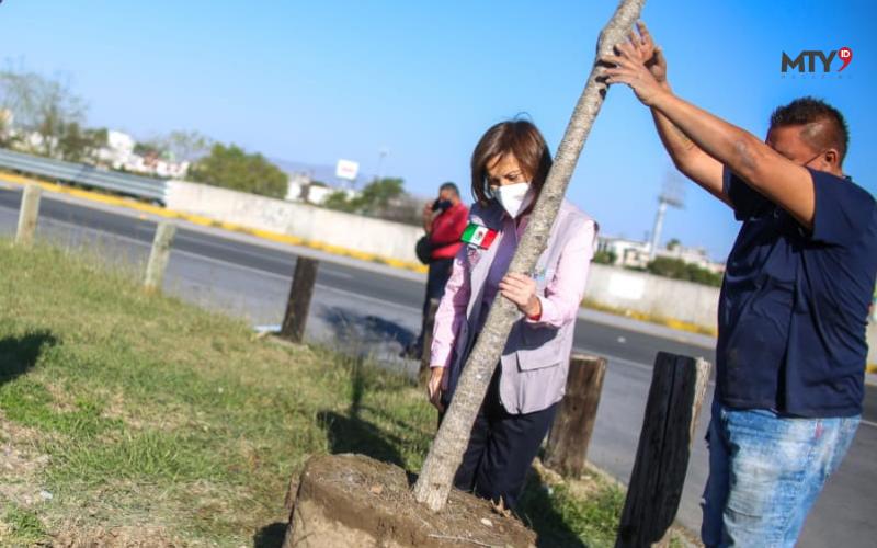 Siembran Encinos en espacios públicos de Guadalupe