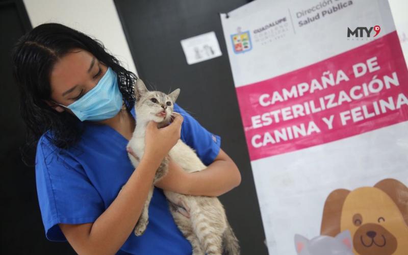 Promueven campaña de Esterilización de animales de compañía